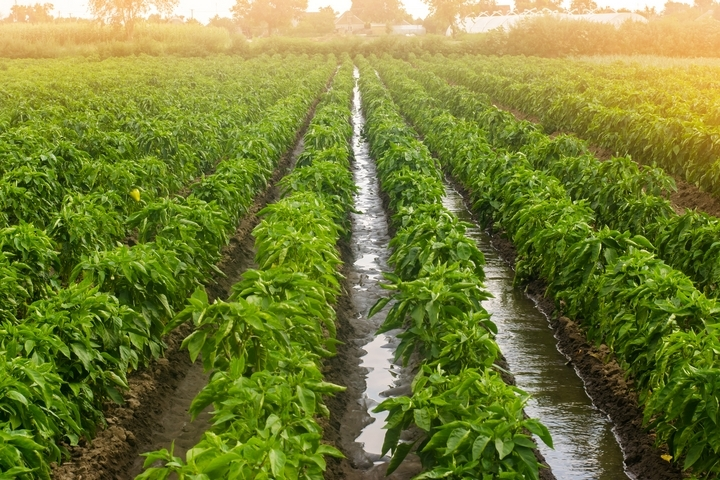 Agriculture 4.0: The fourth agricultural revolution transforming farming