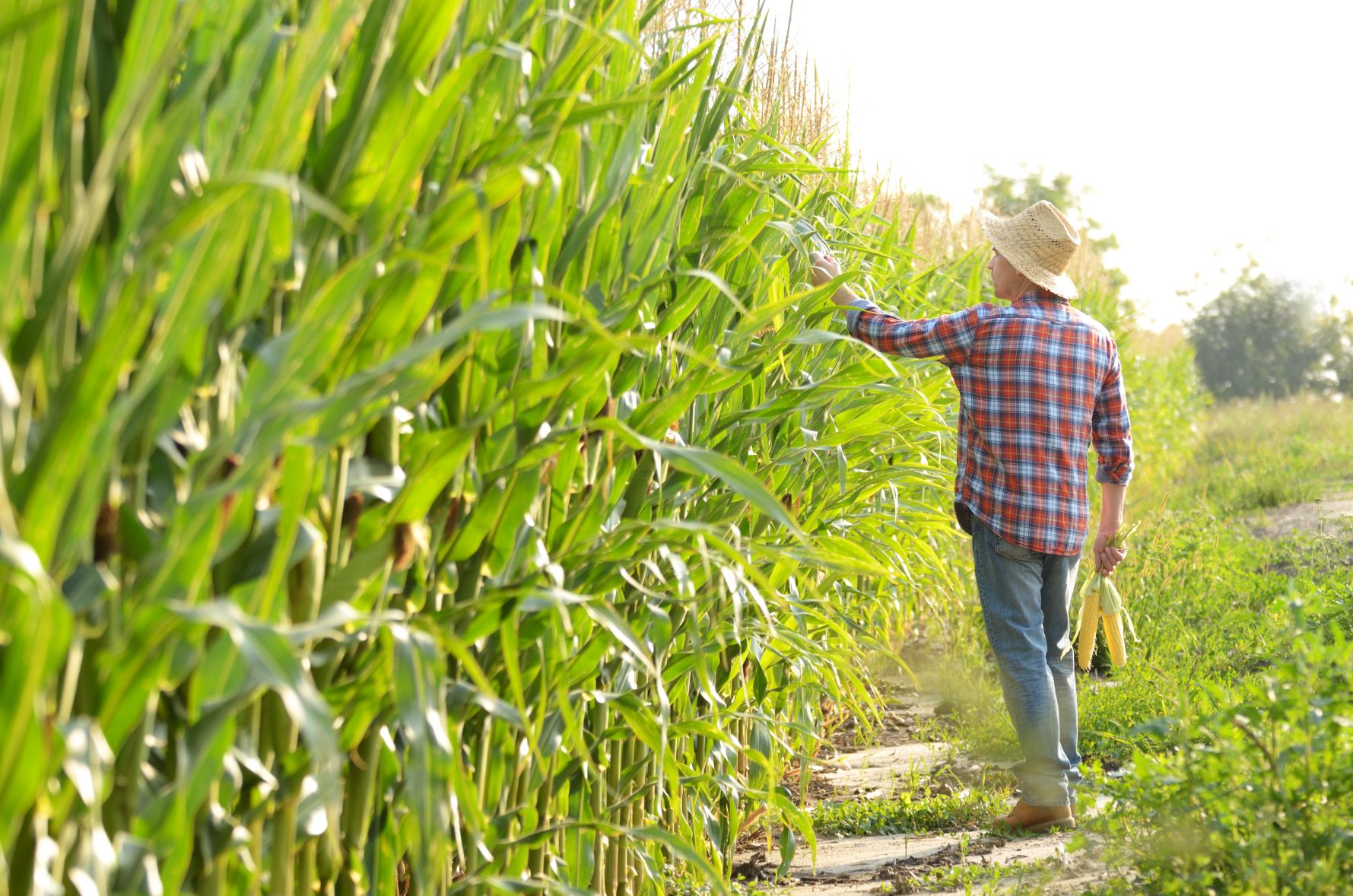 Creating a safe work environment for farmhands