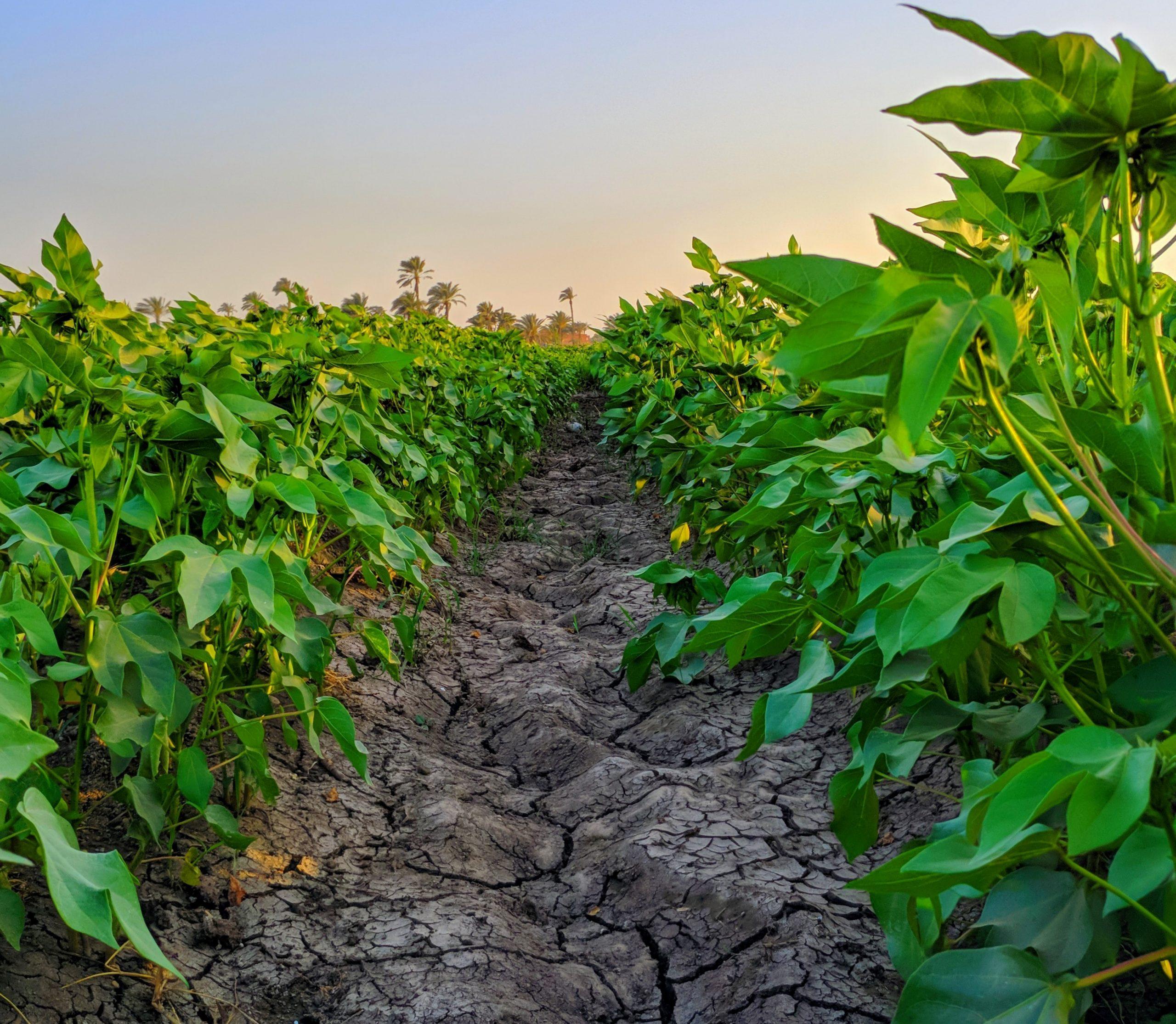 soil analysis;