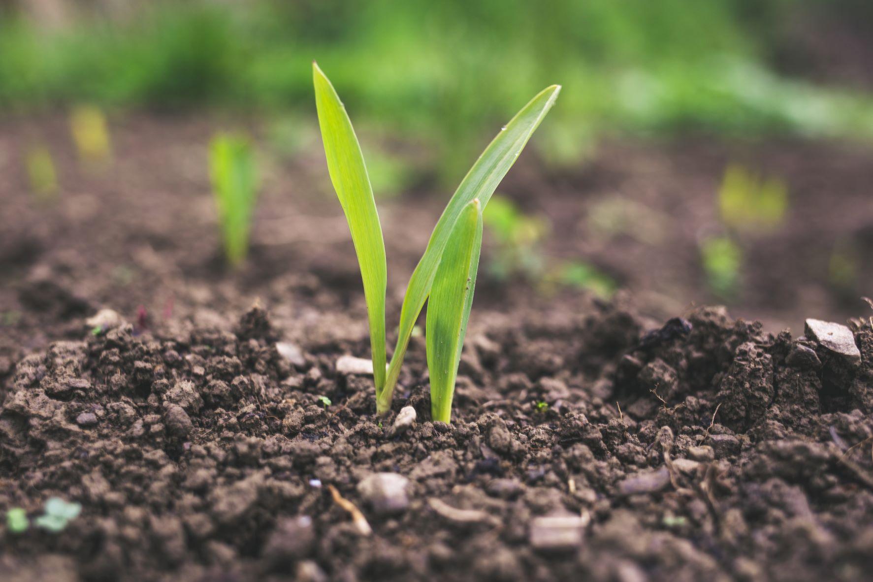 carbon farming;
