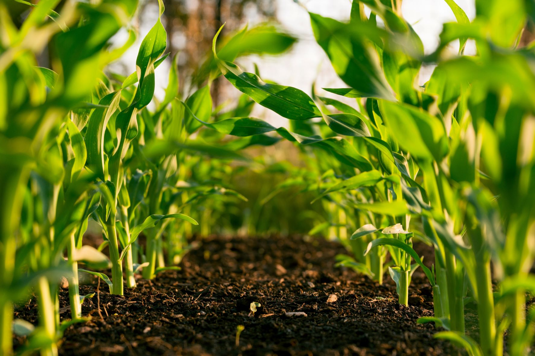 Soil analysis: Helping you uncover your land's health