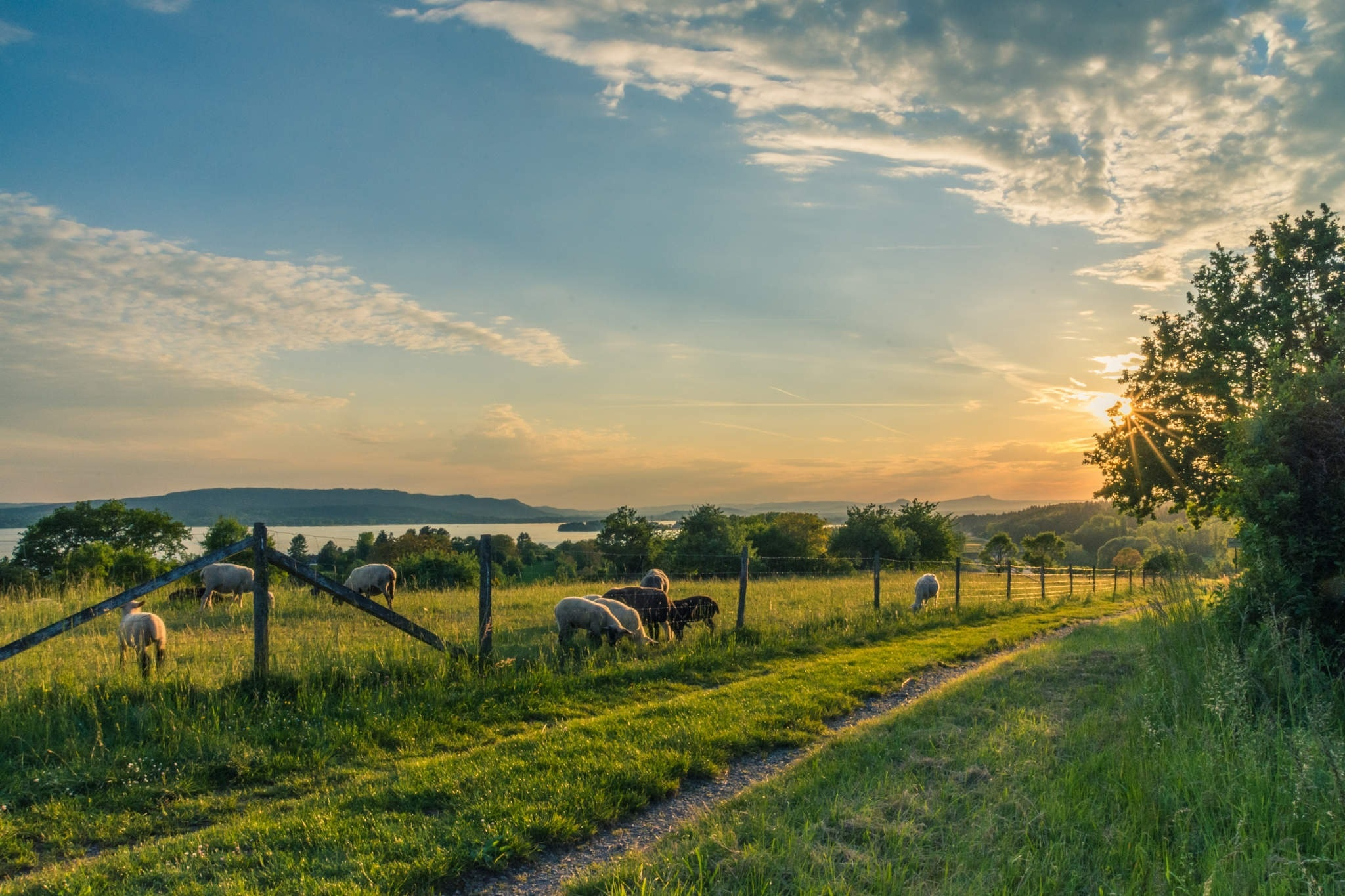 Securing your farm through livestock theft prevention