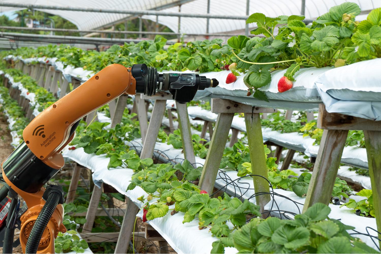 Vertical Farming Automation;