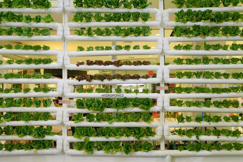 Vertical Farm;