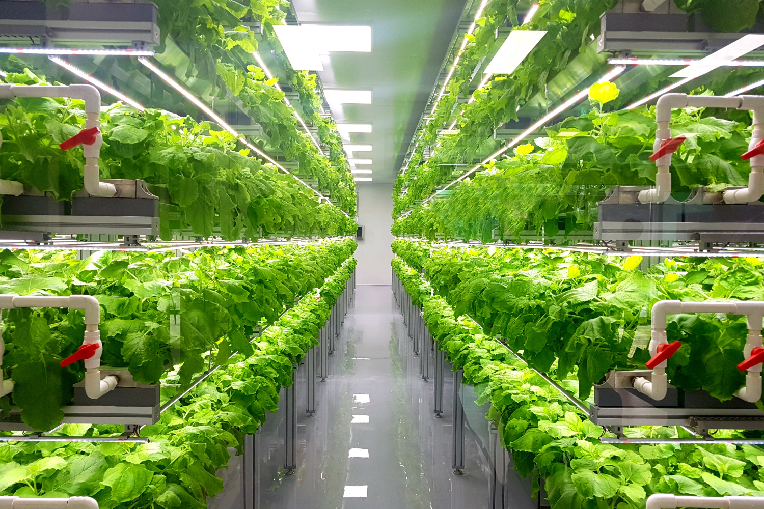 Is vertical farming the future of farming?